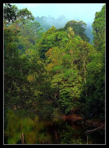 Tropical rainforest by Lexe-I