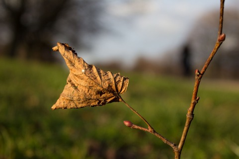 dry winter leave by Pavlina Jane